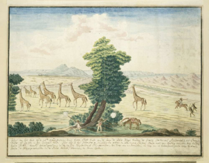 giraffen nabij de Oranje Rivier door Robert Jacob Gordon