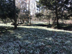 Winterbloemenpracht De Wildenborch